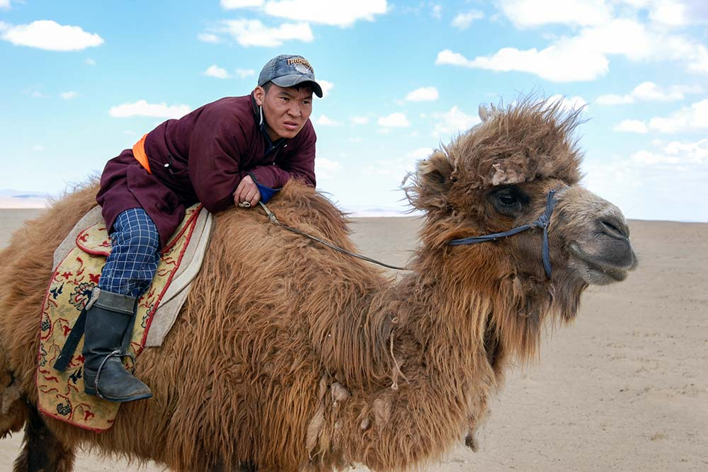 Camels are a common sight in the Gobi desert.