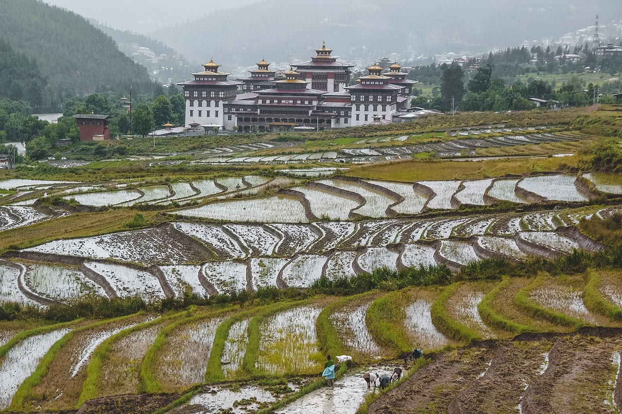 Rice terraces and Thimphu Dzong during the rainy season in Bhutan.