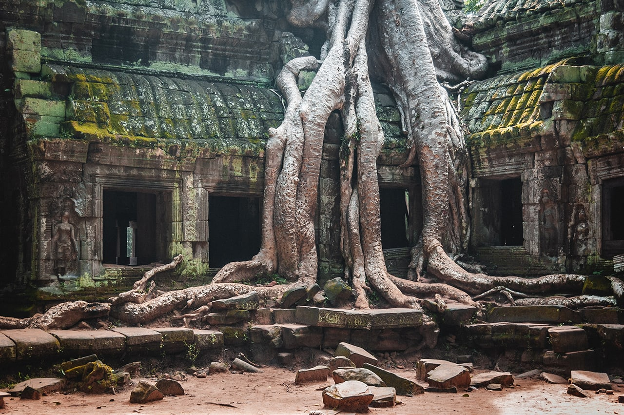 The overgrown Ta Phrom temple in Siem Reap, constructed by King Jayavarman in the 12th century.