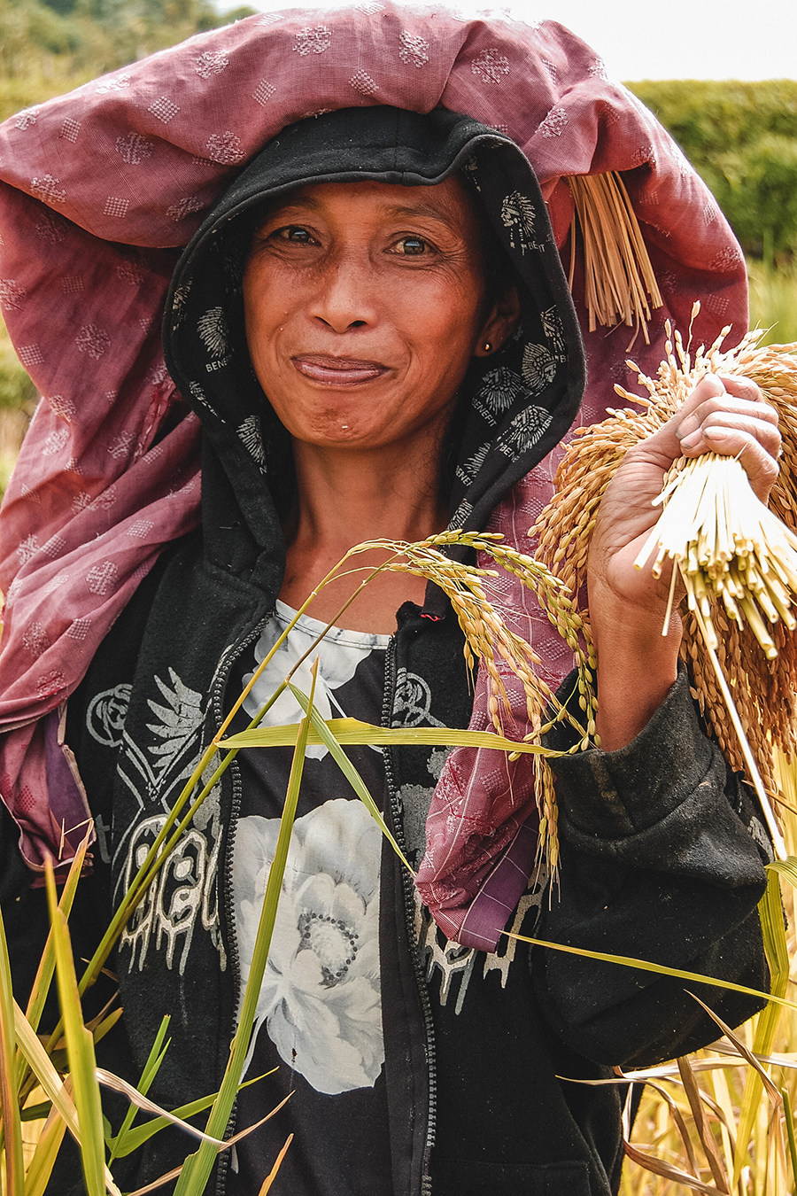A woman harvesting rice in Toraja, Indonesia.