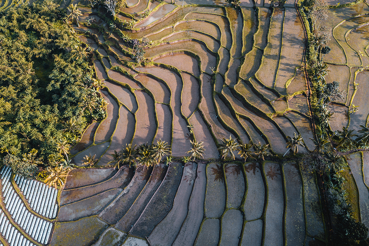 Drone looking down on the rice fields surrounding Kawah Ijen in Banyuwangi, Indonesia.
