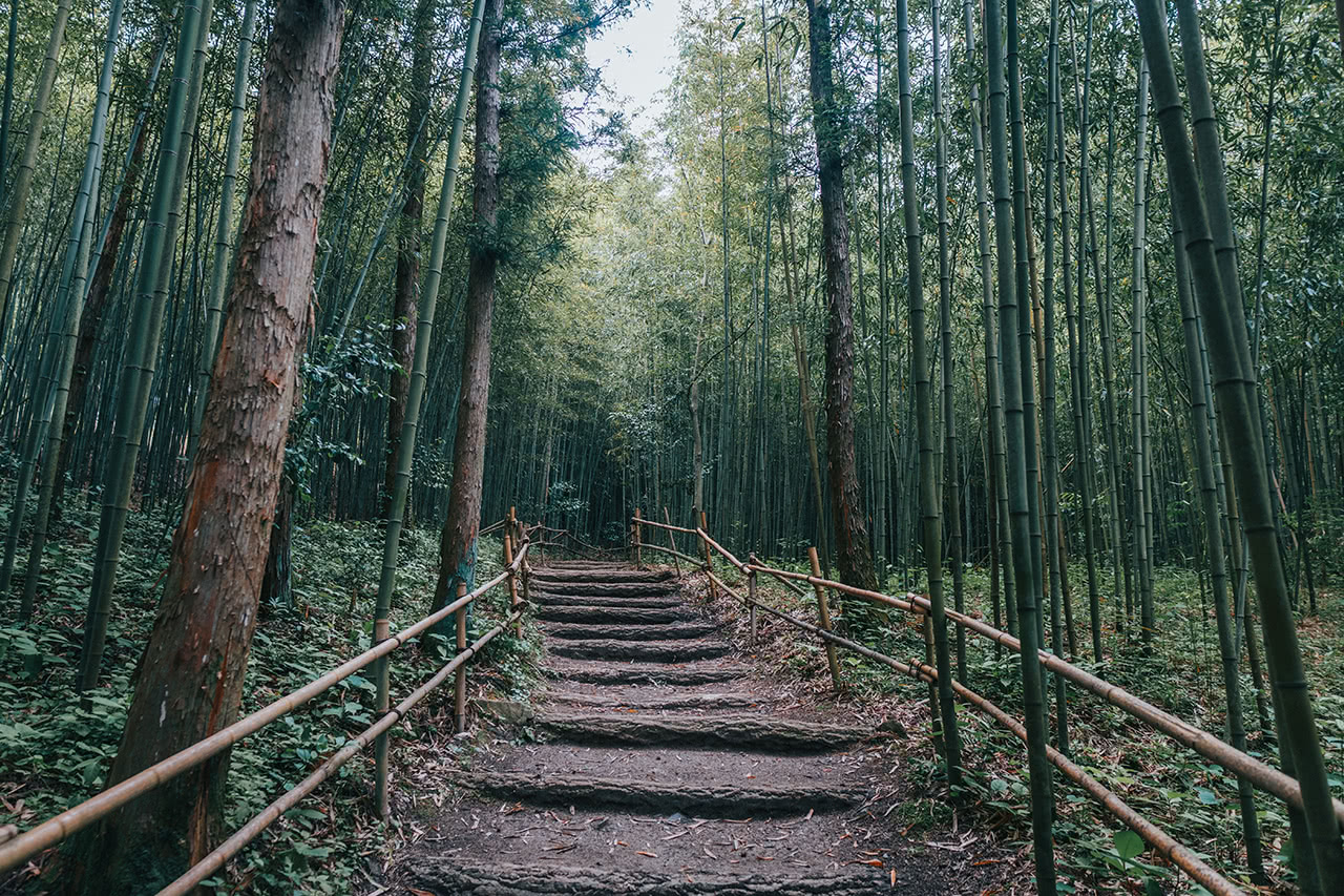 Bamboo forest leading to Songgwangsa Temple, in remote South Korea.