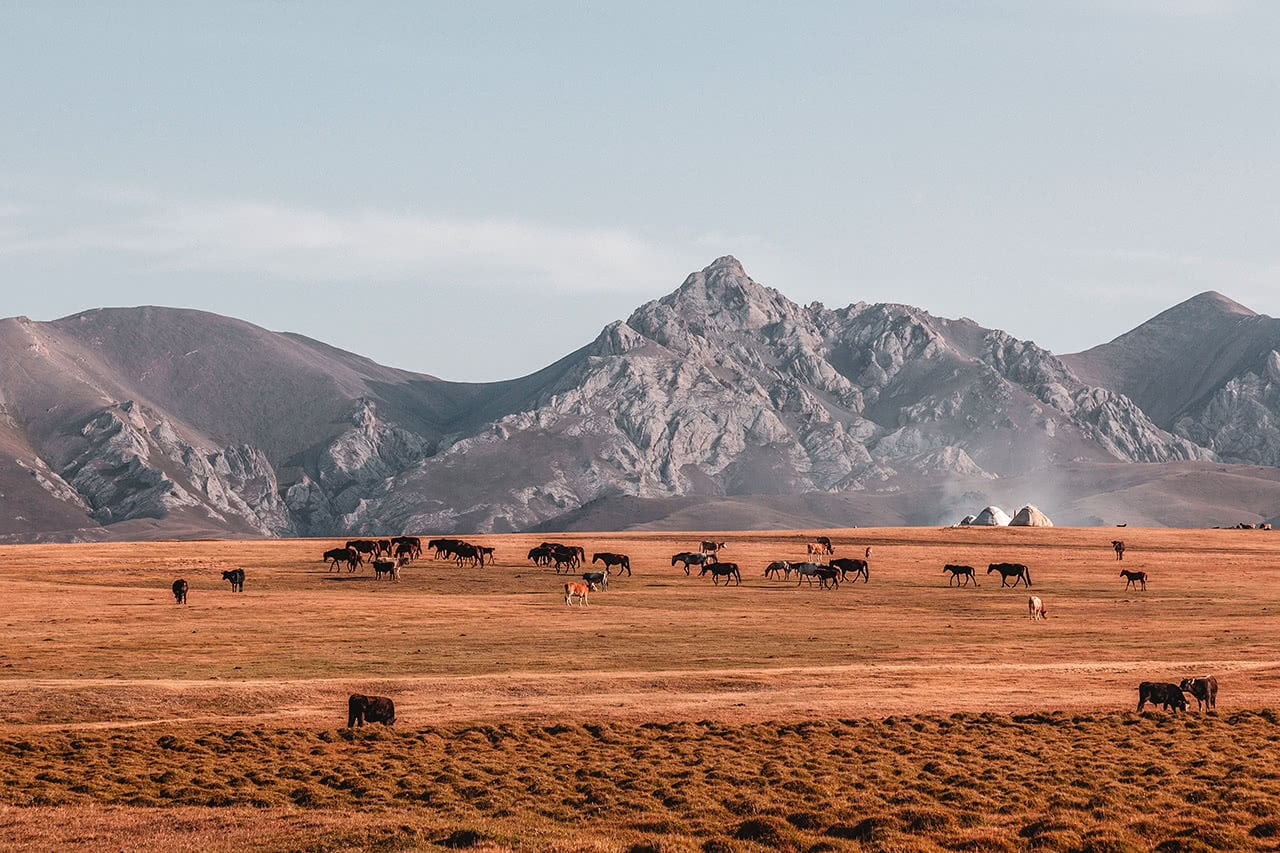 Horses and livestock return home shortly after sunrise at Song-Kul Lake in Kyrgyzstan.
