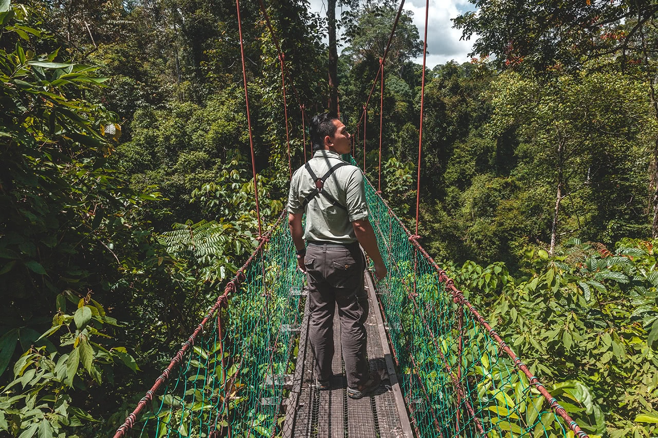 Canopy walk in the Danum Valley, Malaysia.