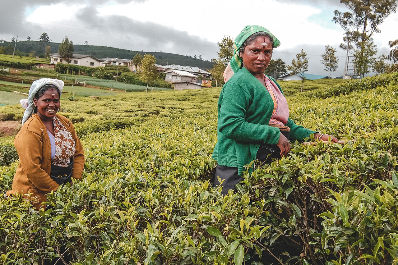 Tea pickers in Nuwara Eliya, Sri Lanka.