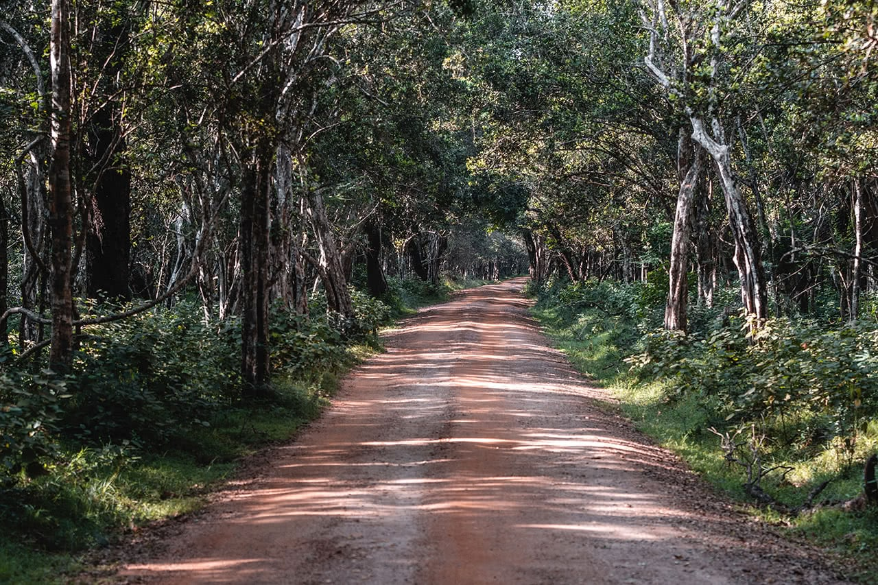 The road leading the the center of Wilpattu National Park, Sri Lanka.