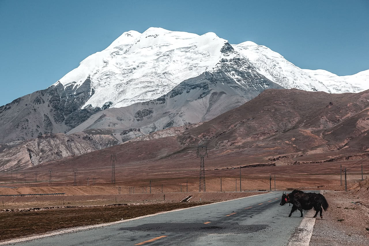 A yak casually walks across the road with Mt. Nojin Kangsang Glacier in the background.