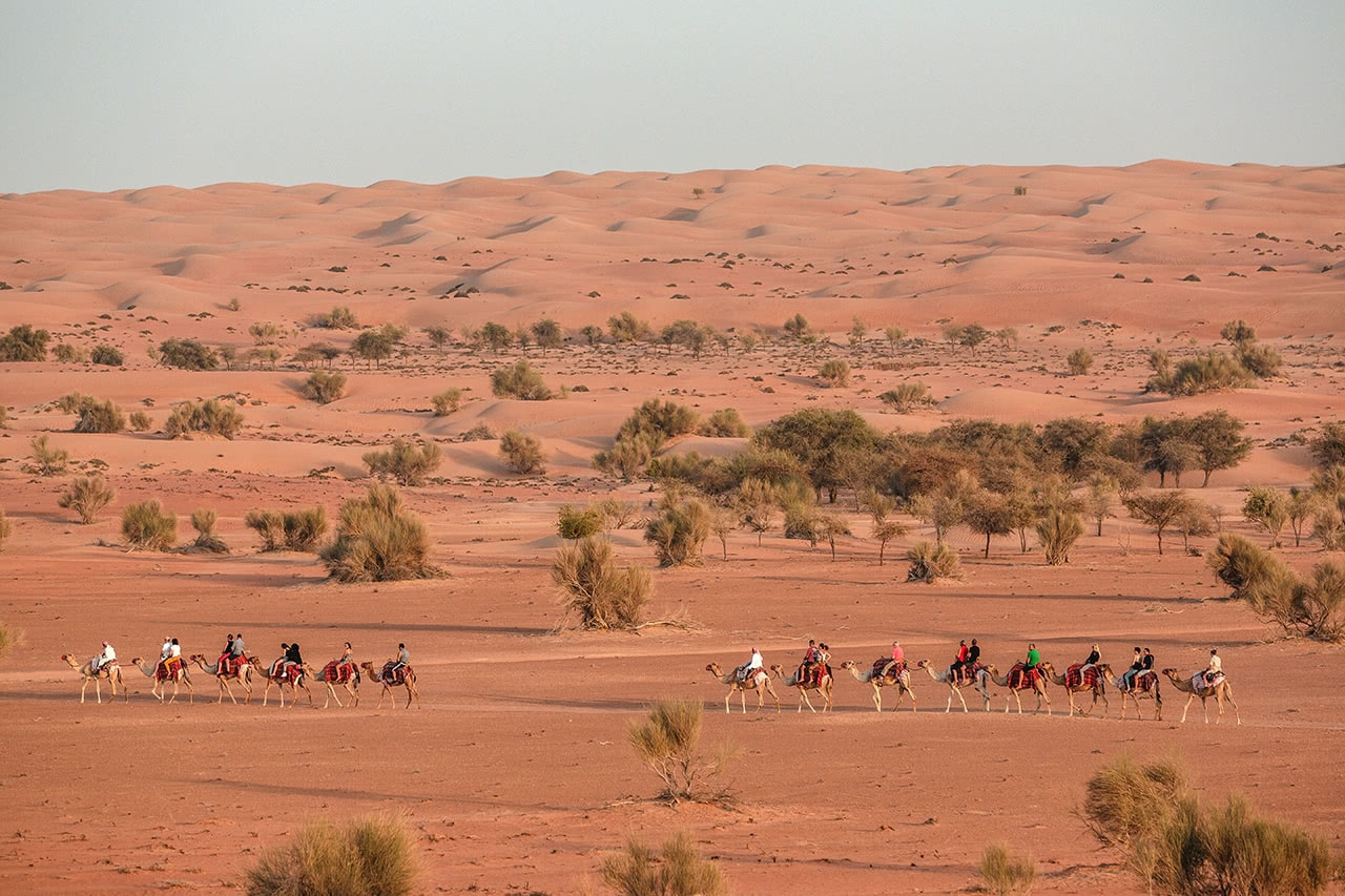 Guests of Al Maha resort taking a camel trek through the sands of the Dubai Conservation Reserve.