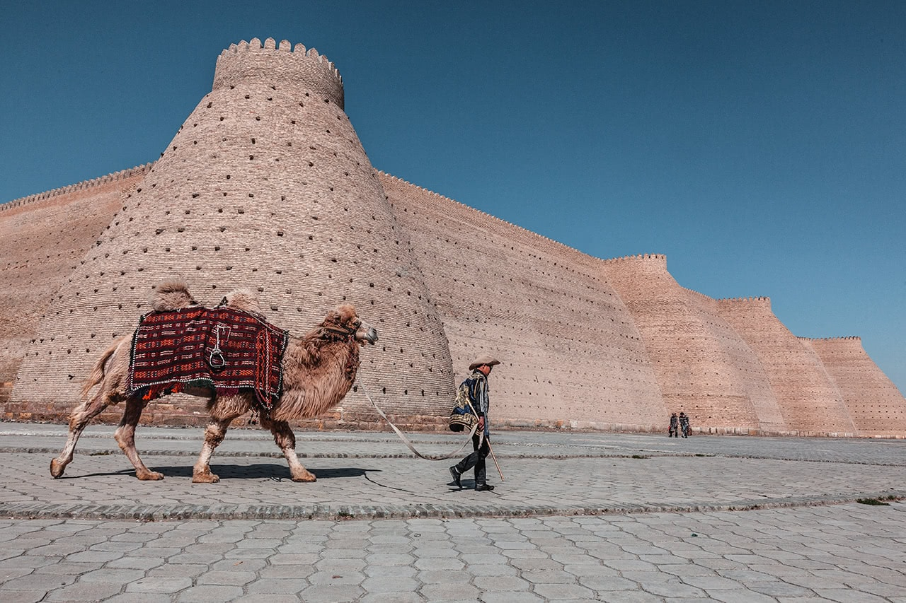 A camel is lead past the Ark Fortress in Bukhara, Uzbekistan