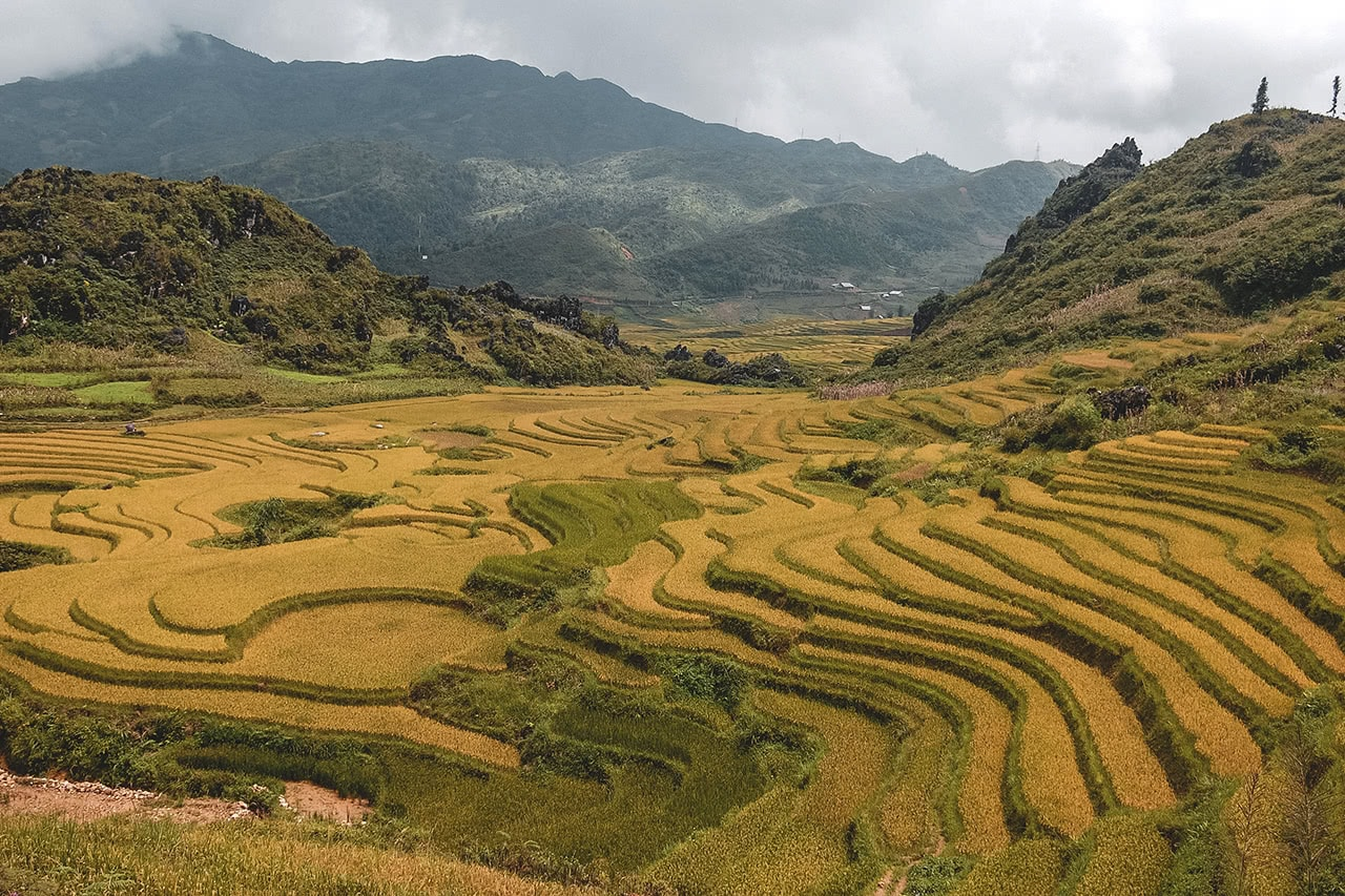 Beautiful rice terraces in Sapa